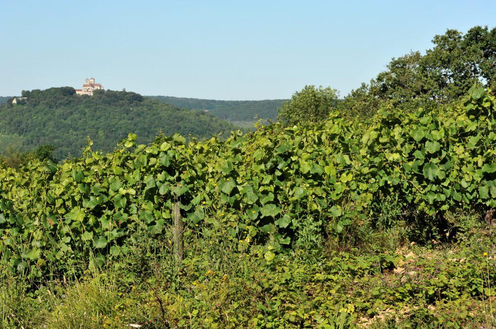 Vézelay - La colline depuis les vignes de Fontette