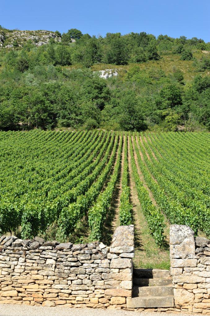 Santenay - Les vignes et la montagne à Santenay-le-Haut