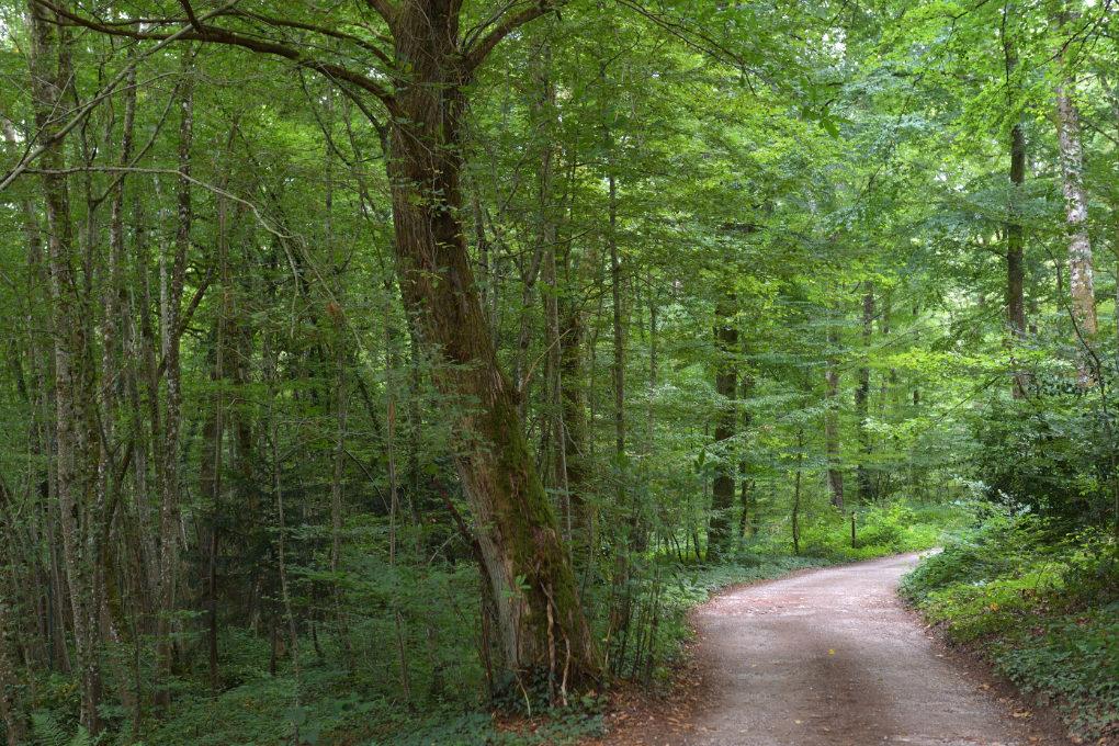 Epinac - Le chemin forestier du Val Saint-Benoît