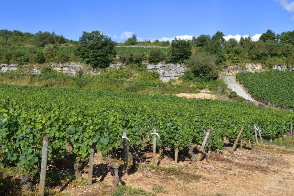 Saint-Romain - Les vignes